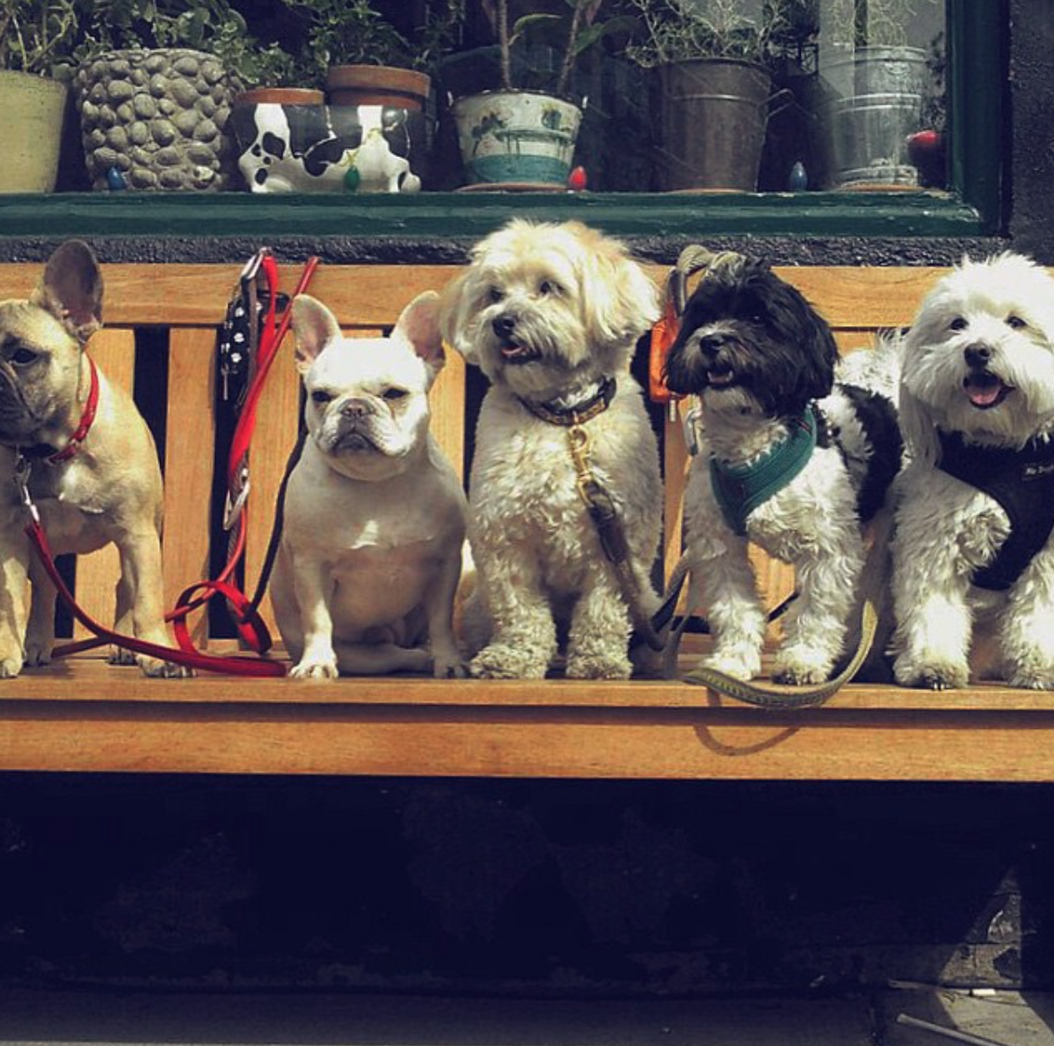dogs in the west village
