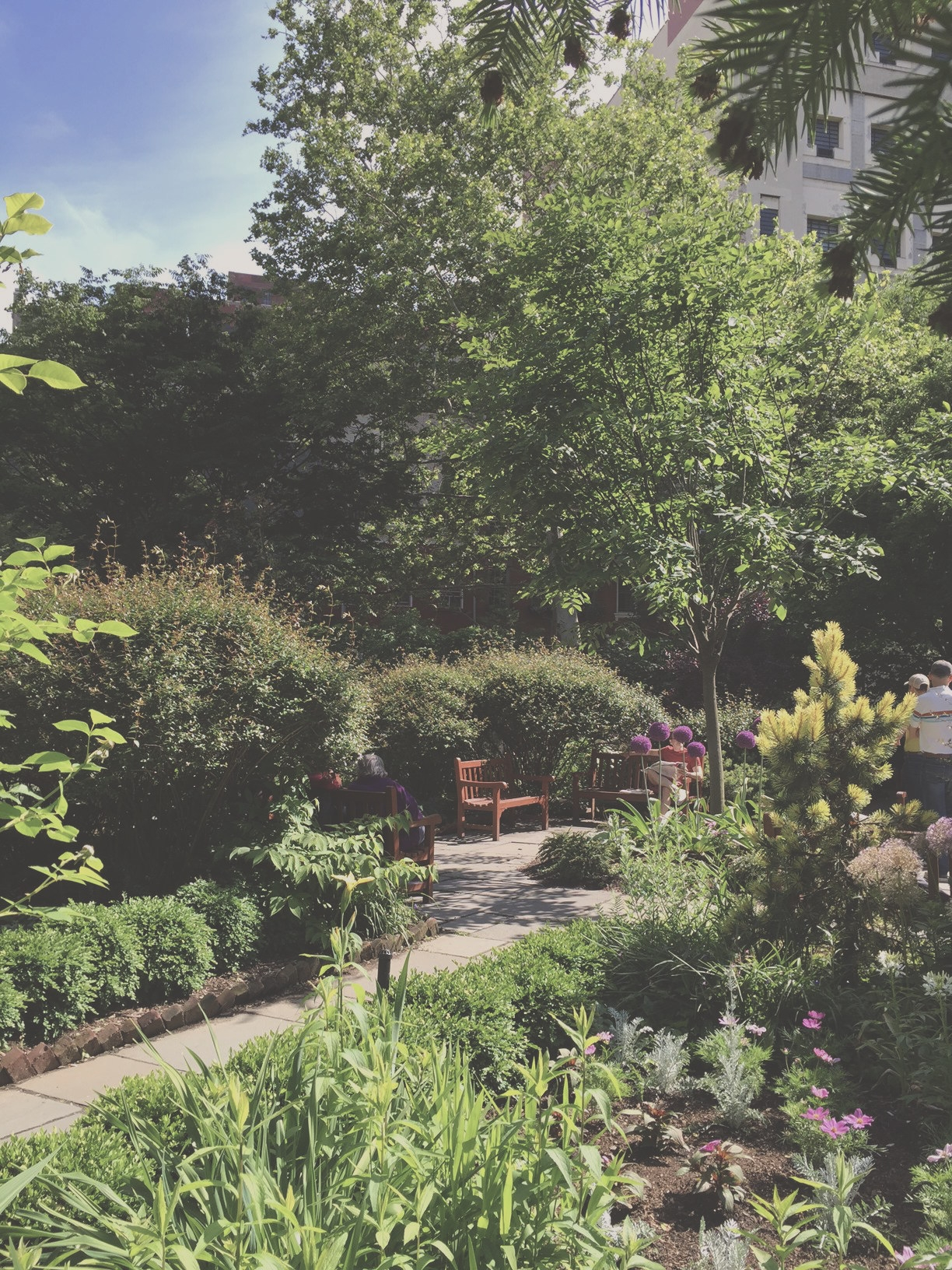 Gardens st Lukes 2