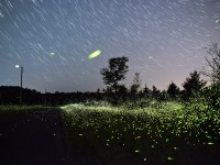 fireflies of upstate new york mauney2